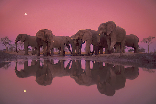 Frans Lanting - The Best Wildlife Photographer