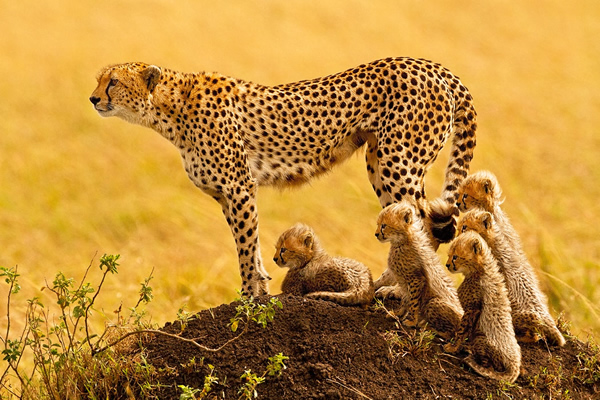 Stephen Oachs - The Best Wildlife Photographer