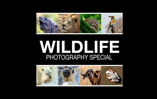 Free eBook: Wildlife Photography Special