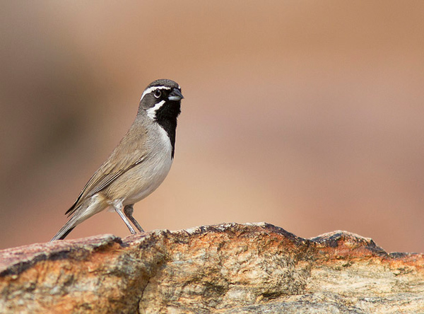 9 Tips For Photographing Perched Birds