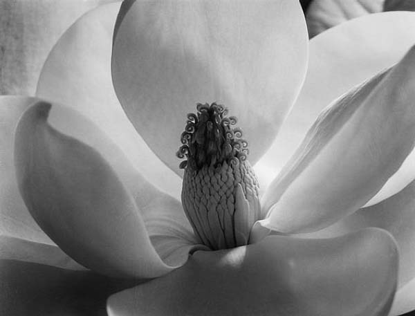 An Interview with Imogen Cunningham by Archives of American Art