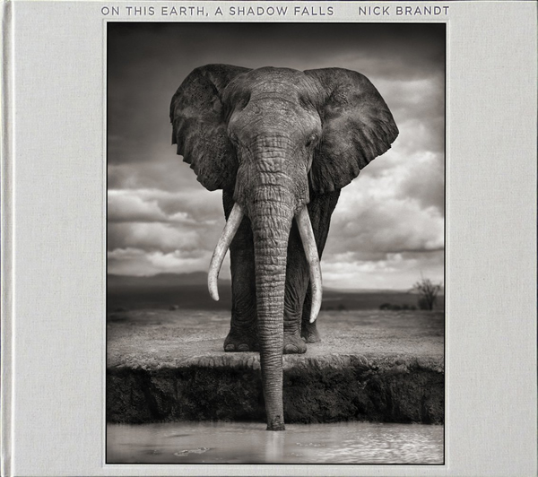 On This Earth, A Shadow Falls by Nick Brandt