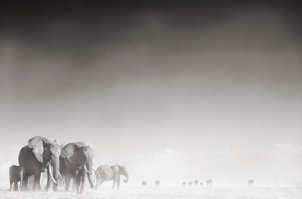 Elephants by Nick Brandt