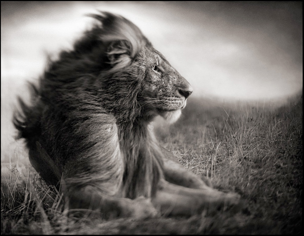 An Interview with Nick Brandt by Les Photographes