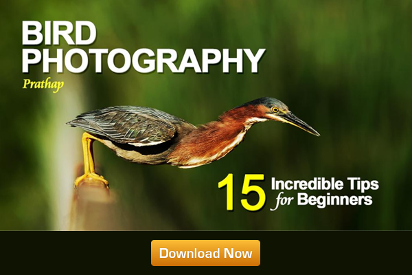 15 Incredible Bird Photography Tips for Beginners - A Free Ebook