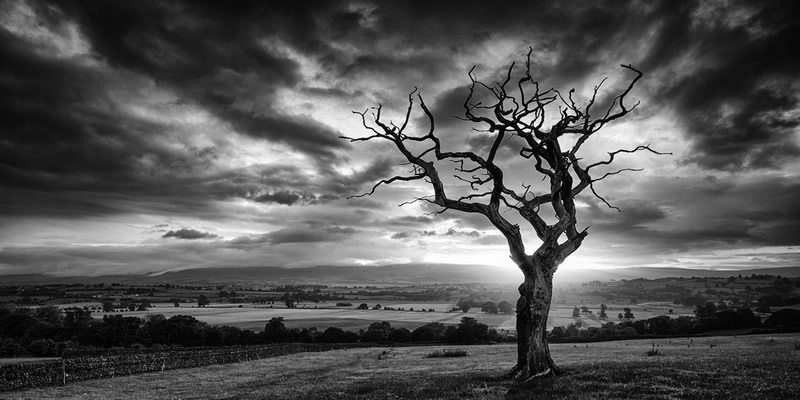 nature mark littlejohn landscape its tree john bw flickr enlarged better