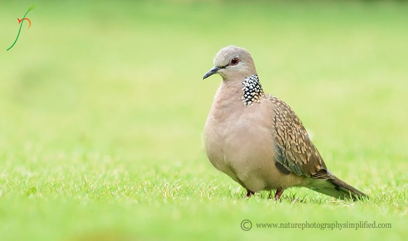 A Simple and Powerful Tip to Improve Your Bird Photography