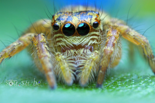 How to use Reverse Ring and Extension Tube for Macro Photography