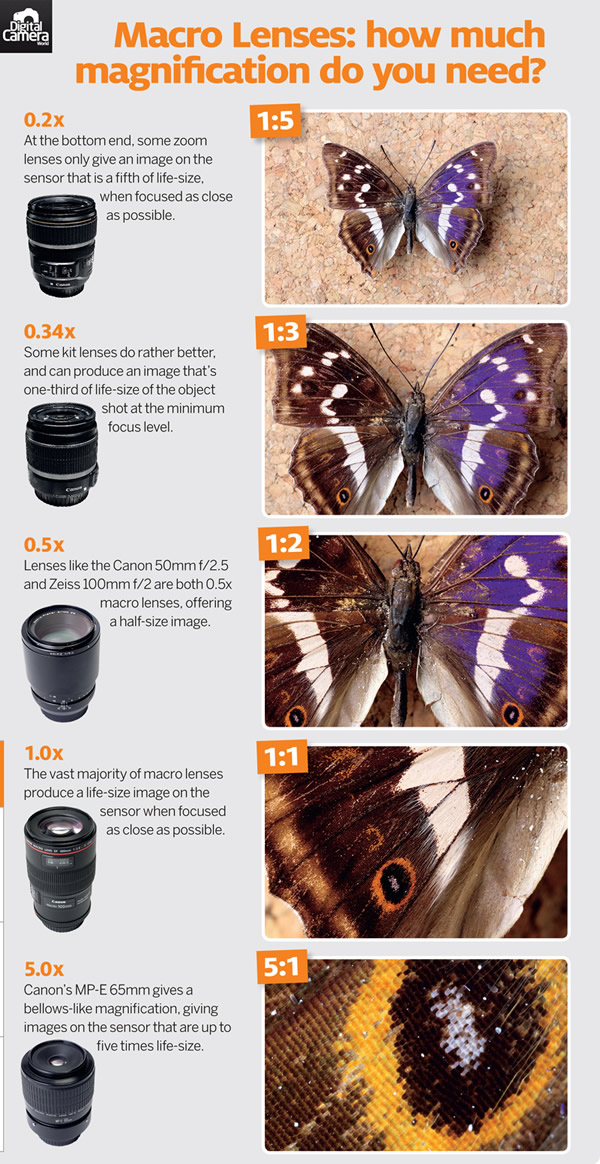 Macro Lenses: How much magnification do you need?