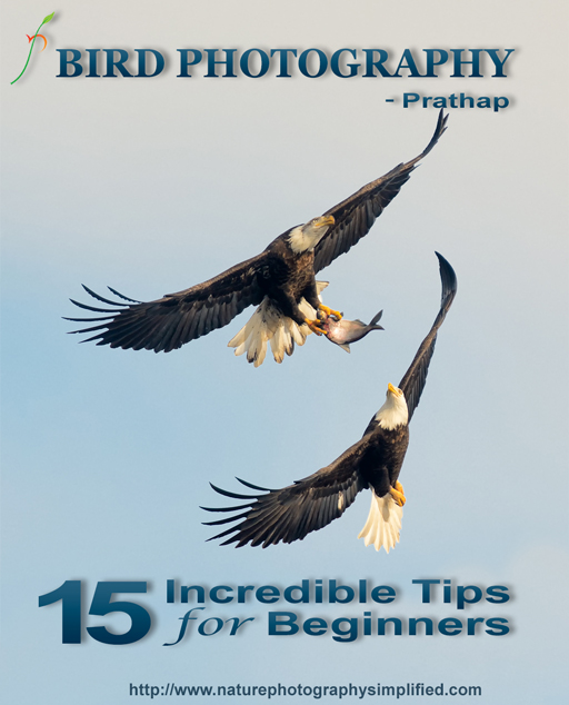 Bird Photography Tips for Beginners