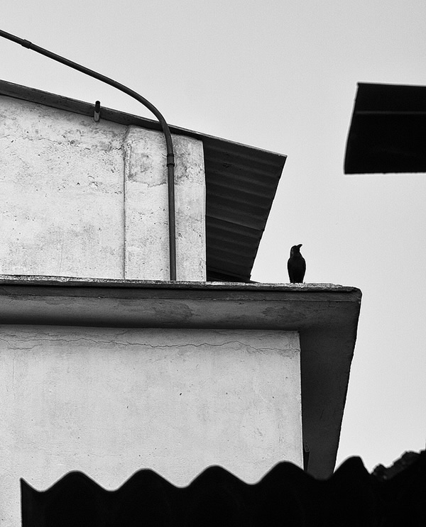 Birds in Street Photography