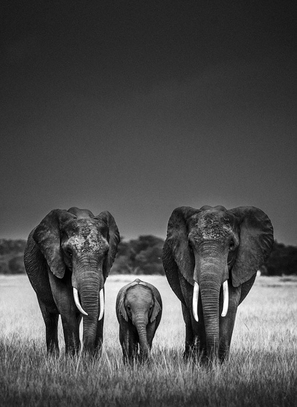 Unbelievable High Contrast B&W Photos Of African Wildlife ...