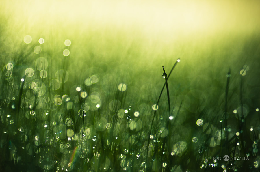 Beautiful Fine Art Nature Photography by Joni Niemela