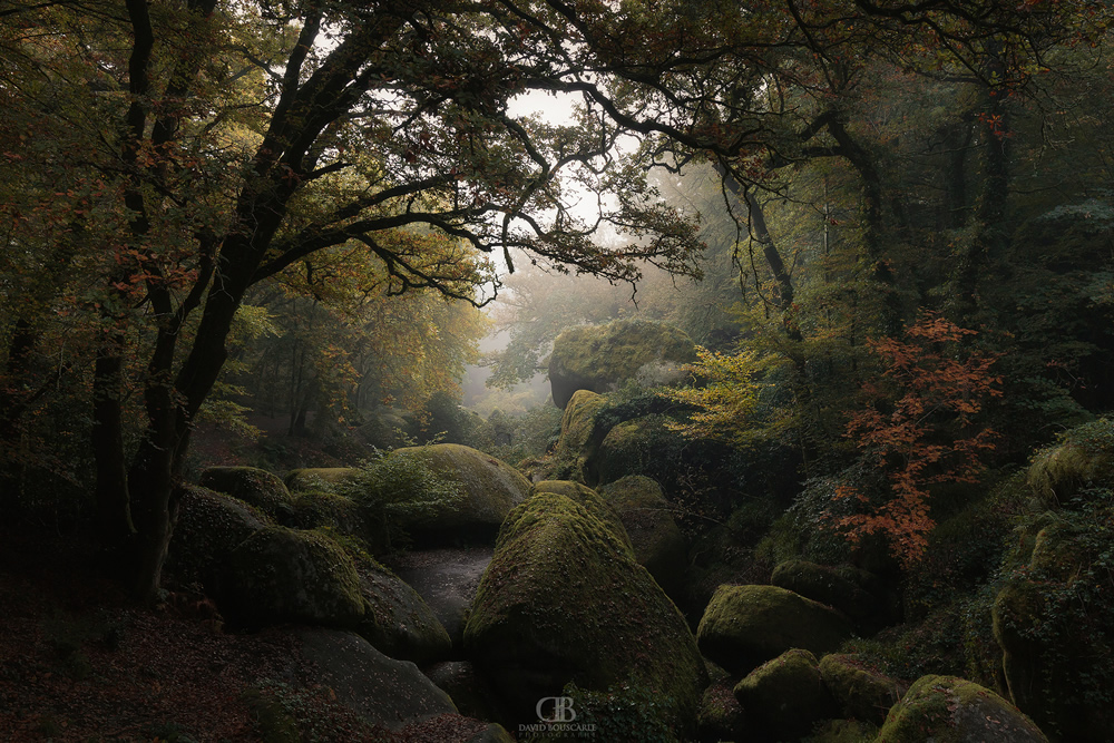 David Bouscarle - French Landscape and Nature Photographer