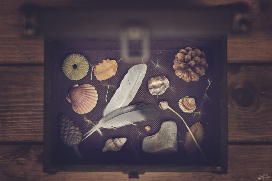 Alicia Llop Still Life Photography