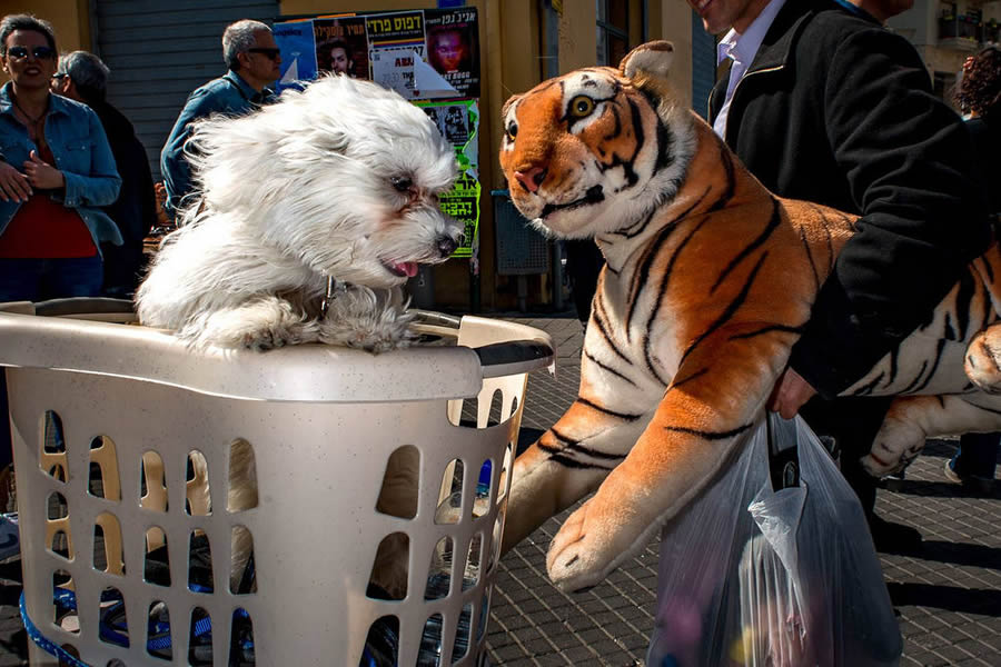 Tiger and Dog - Street Photography and the art of composition photos