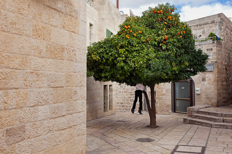 Orange Tree. Jerusalem - Street Photography and the art of composition photos