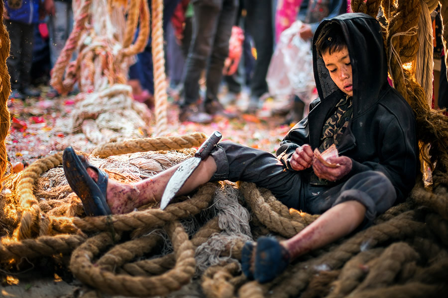 A young kid is taking rest under the chariot after animal sacrifice