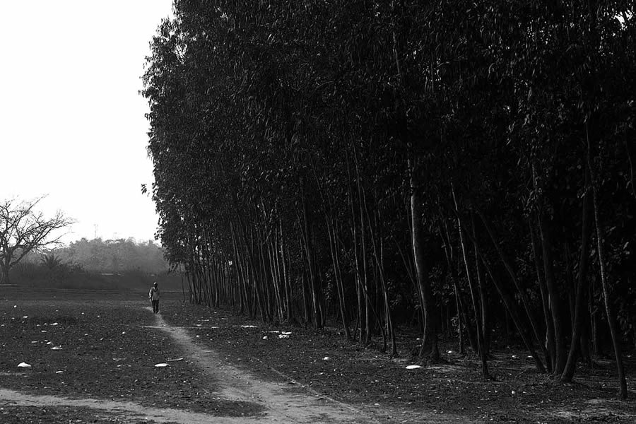 Trees – Photo Series By Indian Photographer Nilanjan Ray