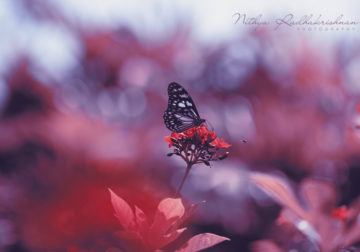 Nithya Radhakrishnan – This Indian Photographer Redefines Flora Photography With Her Dreamy Frames
