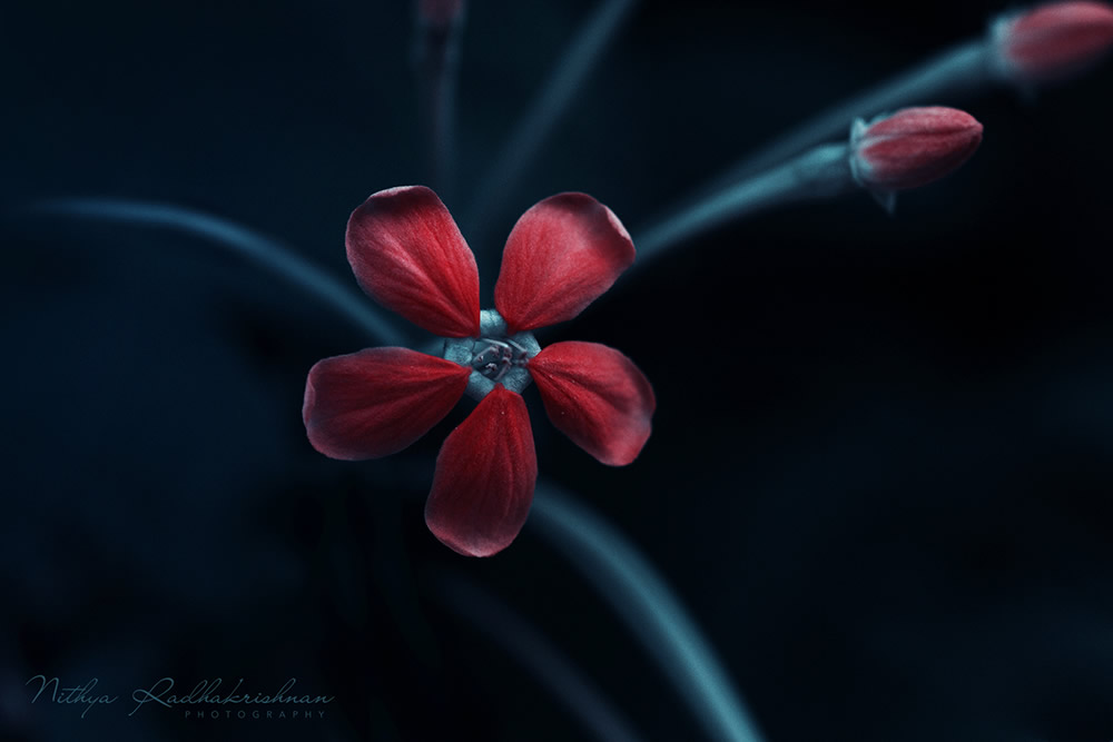 Nithya Radhakrishnan - Nature and Flora Photographer From Chennai, India