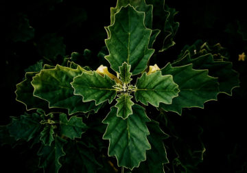 Leaves – Photography Series By Indian Photographer NS Hrishikesh