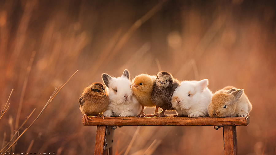 Spring Babies - Best Top Photos on 121 Clicks Flickr Group