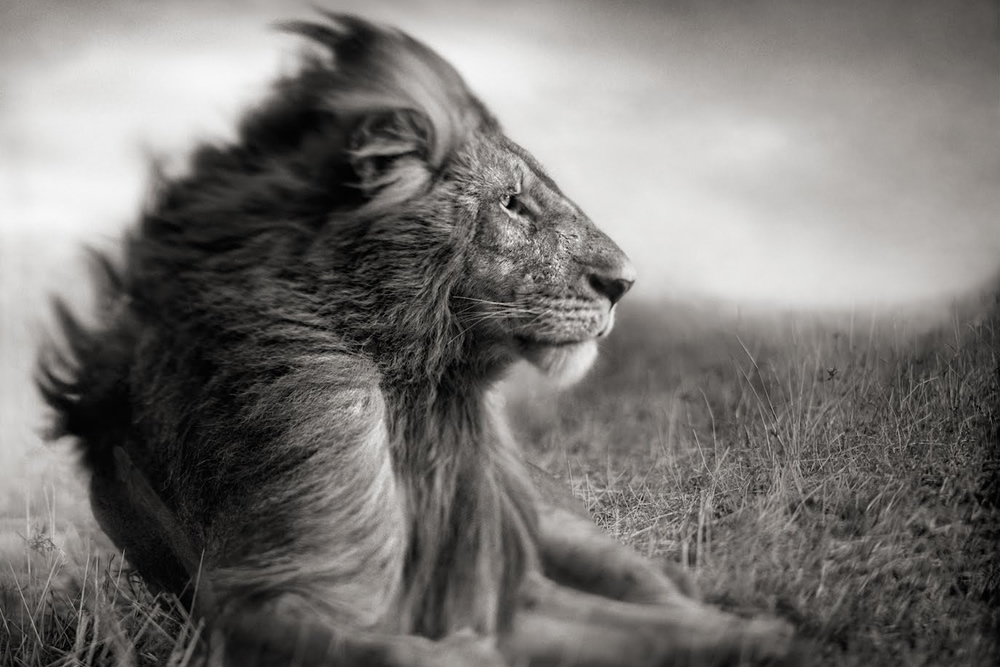 An Inspiration Talk By Master Photographer Nick Brandt About His Photography Journey