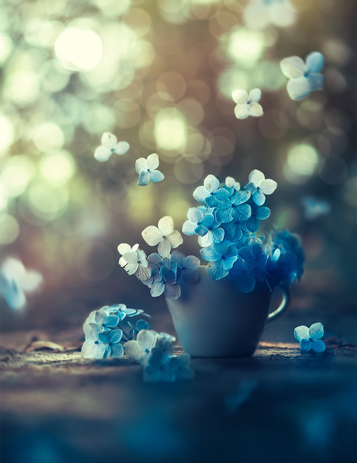 Interview With Bangladeshi Photographer Ashraful Arefin