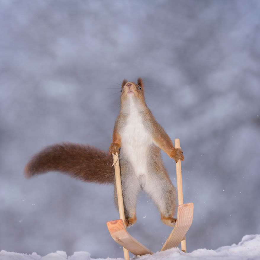 Squirrel Winter Olympics: Most Beautiful Photo Series By Geert Weggen