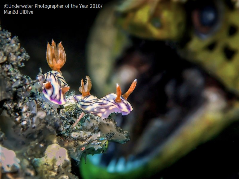 Up & Coming Underwater Photographer of the Year 'ROAR' - Man BD