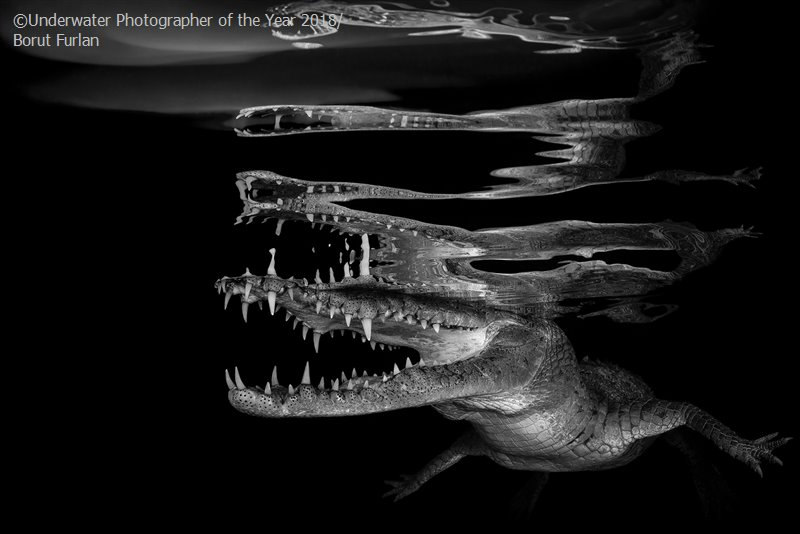 Black & White - Winner 'Crocodile reflections' - Borut Furlan