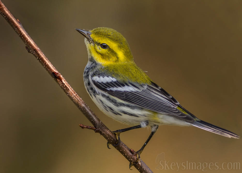 Interview With American Avian Photographer Scott Keys