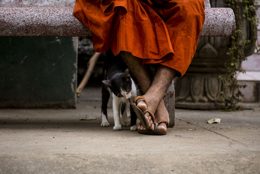 Photographer Paola Stella Travel To Cambodia To Take Pictures Of Cats And Dogs