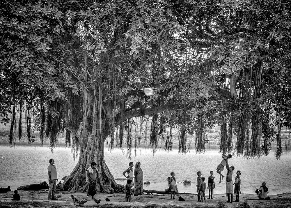 My Journey With Trees: Fascinating Photo Series By Dakshina Murthy