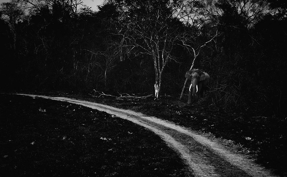 Man And Wild - Conflicting Aspirations: Photo Series By Padmanabhan Rangarajan