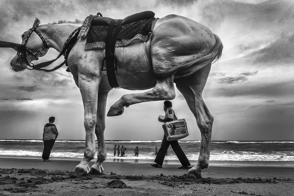 Animals in Street: Photo Series By Indian Photographer Raj Sarkar