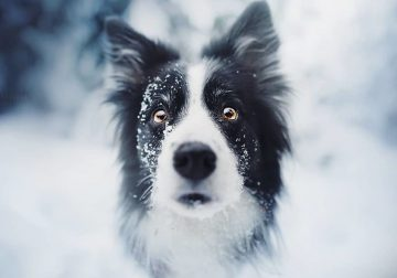 50 Of The Best Dog Photos I Have Ever Captured By Kristýna Kvapilová
