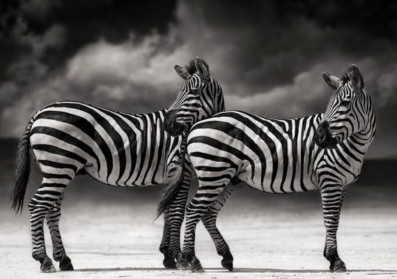 Master Photographer Nick Brandt Talking About Stories Behind His Photographs