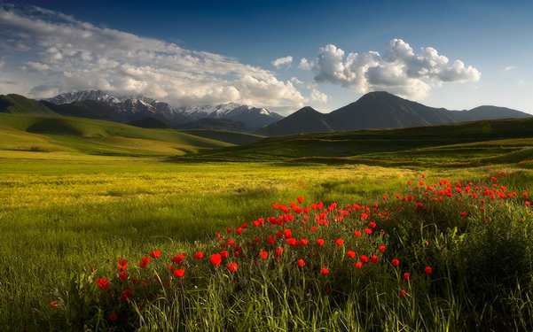 The beauty of Spring - Photography Composition