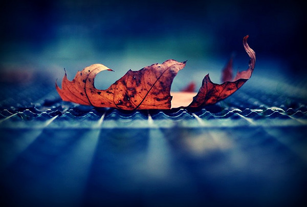 Take it all or leave me alone - Beautiful and Colorful Autumn Leaves Photography