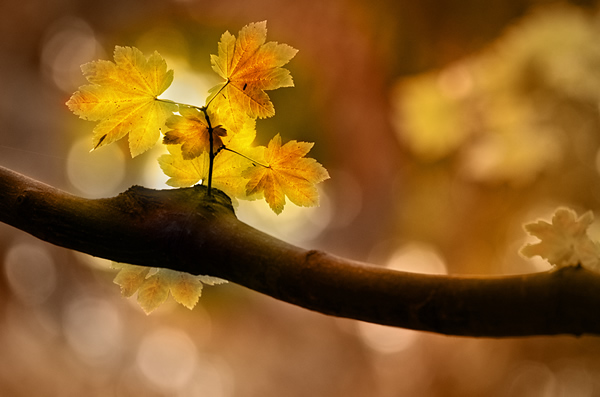 In Autumn - Beautiful and Colorful Autumn Leaves Photography