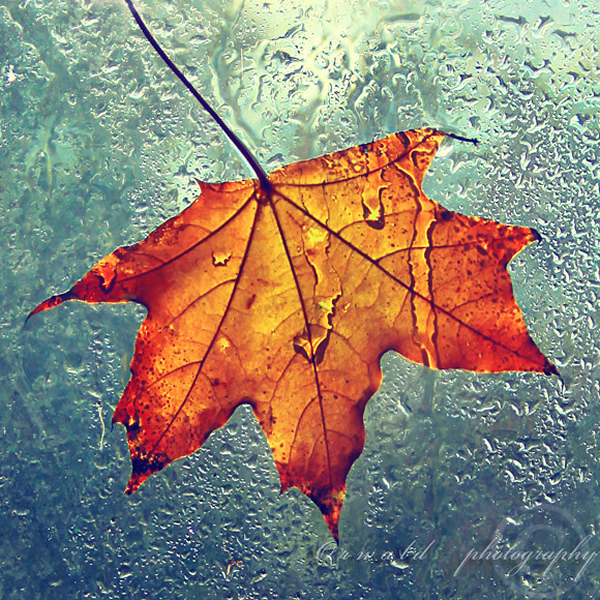 Autumn Leaf - Beautiful and Colorful Autumn Leaves Photography