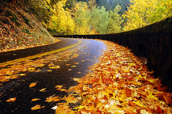 Historic Highway, Autumn Study - Beautiful and Colorful Autumn Leaves Photography
