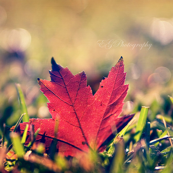 Colors of my Monday - Beautiful and Colorful Autumn Leaves Photography