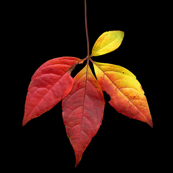 A leaf out of my life - Beautiful and Colorful Autumn Leaves Photography