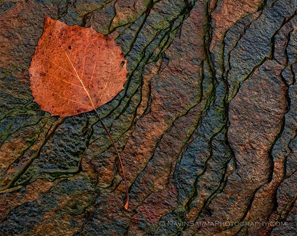 Leave Traces - Beautiful and Colorful Autumn Leaves Photography