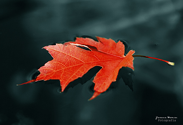 Resting - Beautiful and Colorful Autumn Leaves Photography