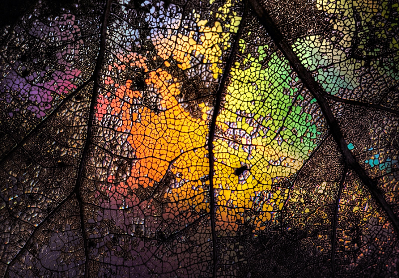 6 Simple Tips To Take Fantastic Abstract Photography 121clicks Com
