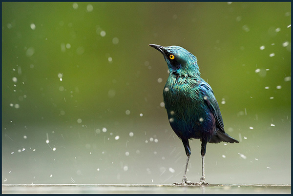 Beautiful Examples of Bird Photography - Who'll Stop the Rain?